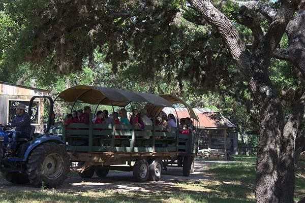 Wagon rides during San Antonio field trips at the ranch!