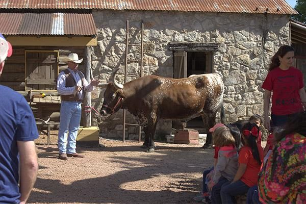 Time with a longhorn during San Antonio field trips at the ranch!
