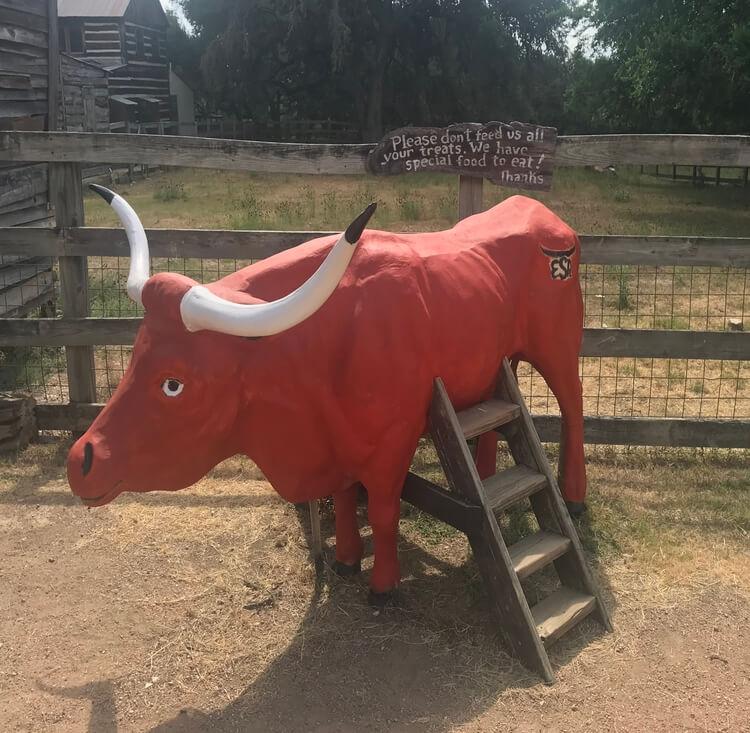 Longhorn photo op at Enchanted Springs Ranch