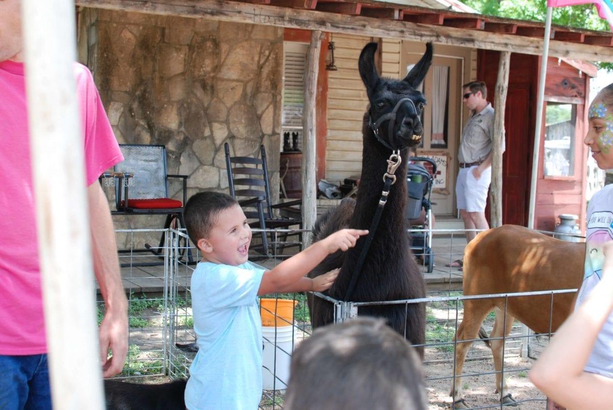 Company Picnic guests enjoying the petting zoo at Enchanted Springs Ranch