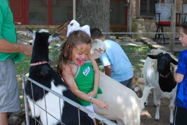 A company picnic guest enjoying petting a goat at the petting zoo