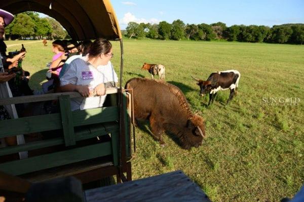 Corporate group enjoying wagon rides at Enchanted Springs Ranch! Photo courtesy of Sun Gold Photography.
